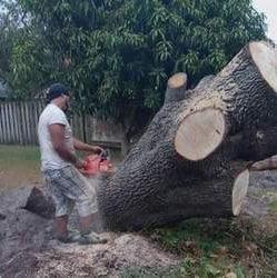 Low Budget Tree Service & Handyman