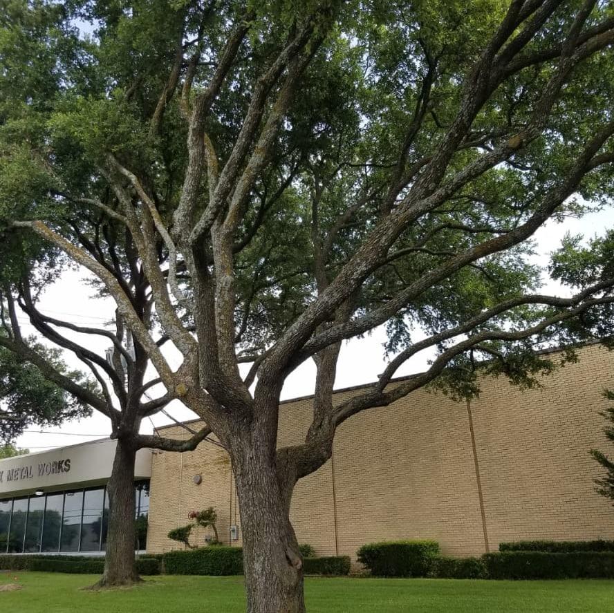 Ventura Tree Services