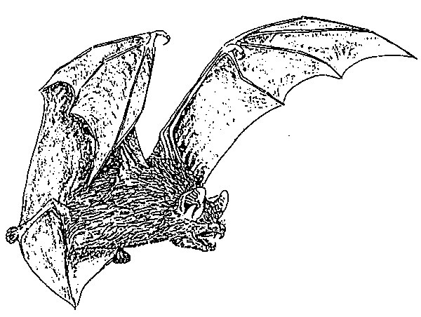 All About Bats & Wildlife Inc
