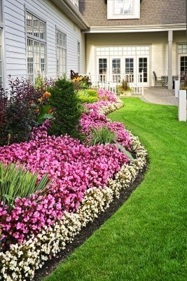 Best Lawns