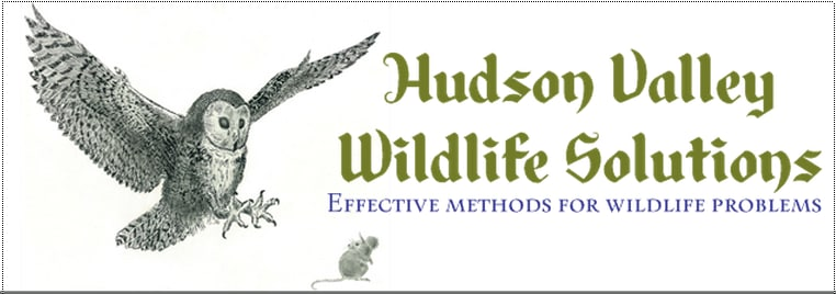 Hudson Valley Wildlife Solutions