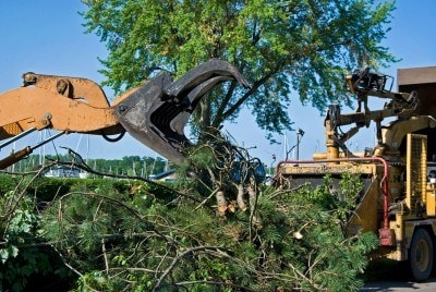 Collins Tree Service