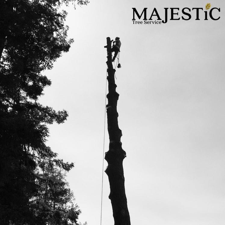Majestic Tree Service