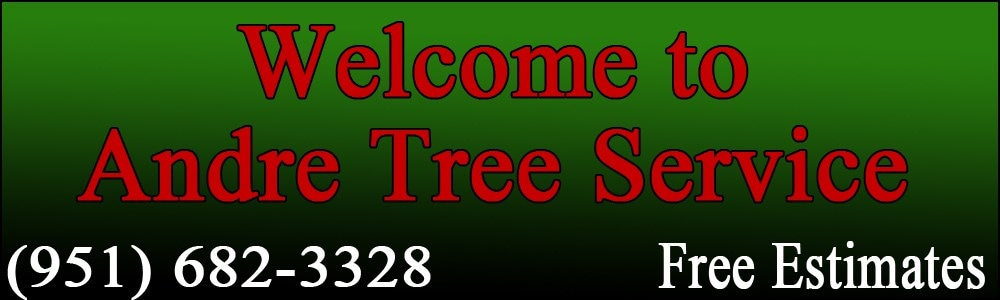 Andre Tree & Palm Service. 951 682-3328