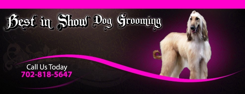 Best in Show Dog Grooming