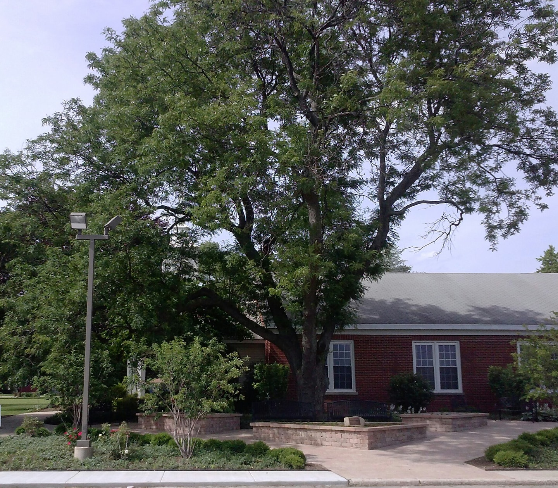 Armadillo Lawn Maintenance & Landscape Inc