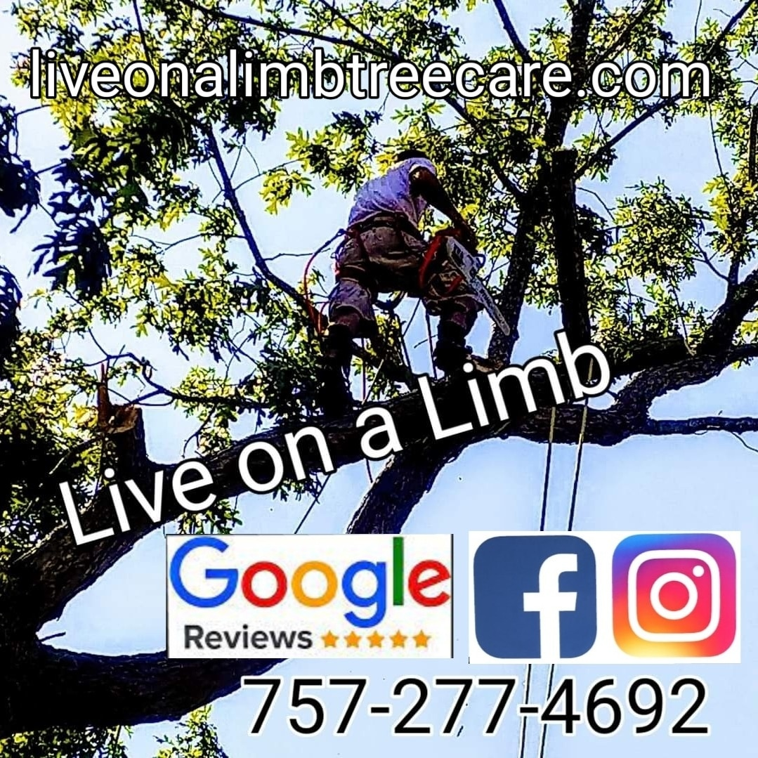 Live On A Limb Tree Care