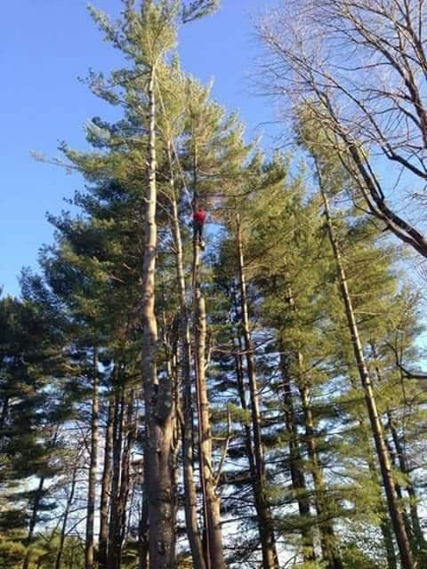 Above All Tree Service