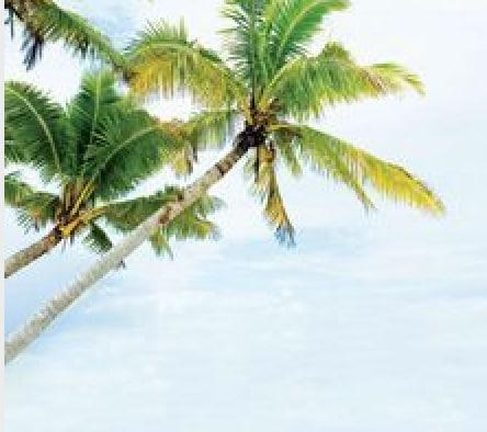 Big Palm, LLC