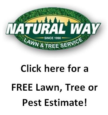 Natural Way Lawn Tree Pest Service Reviews Lake Orion Mi Angie S List