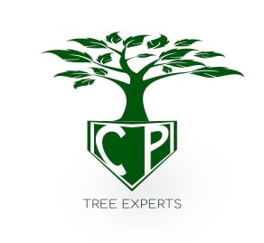 CP TREE EXPERTS