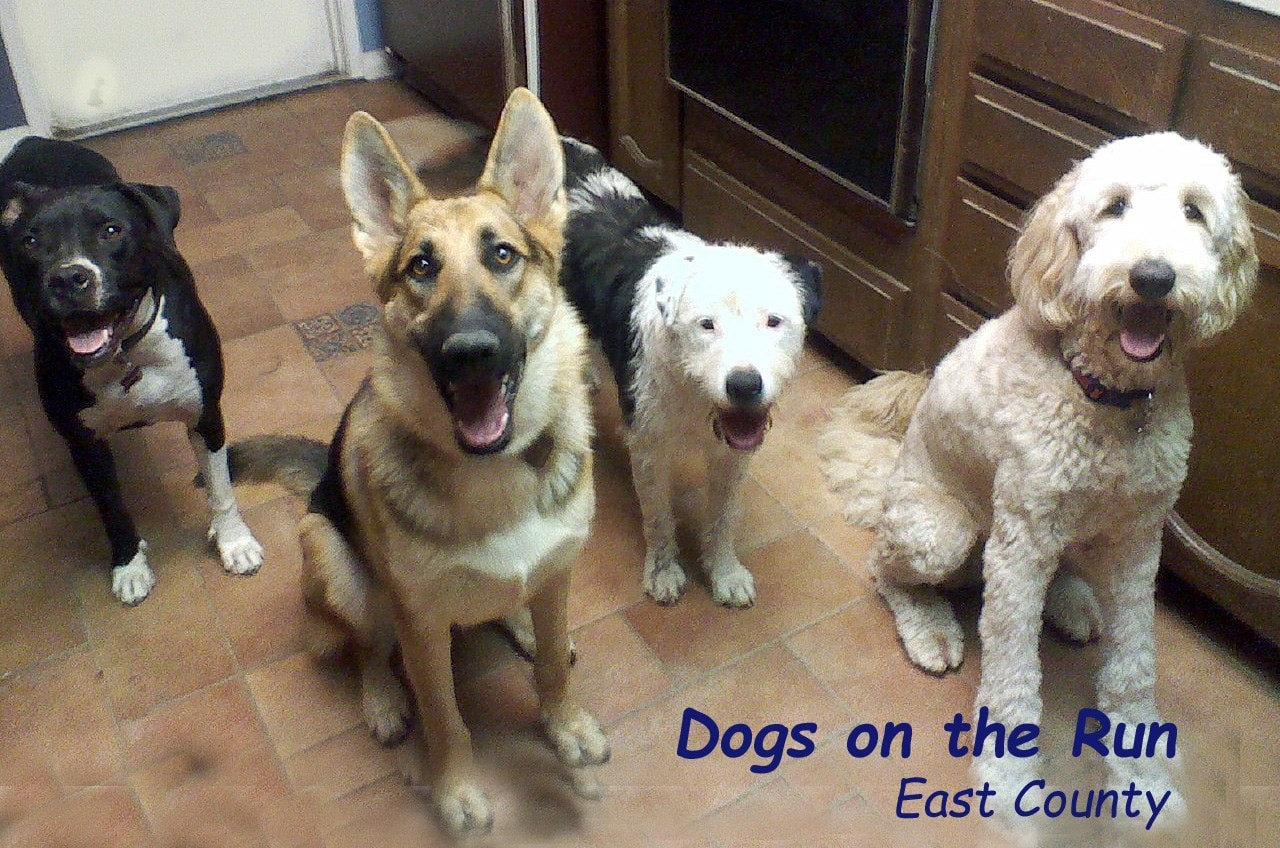 Dogs on the Run - East County