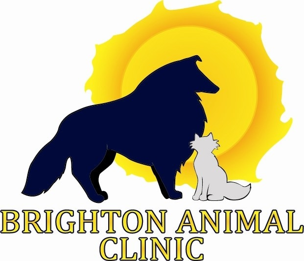 BRIGHTON ANIMAL CLINIC