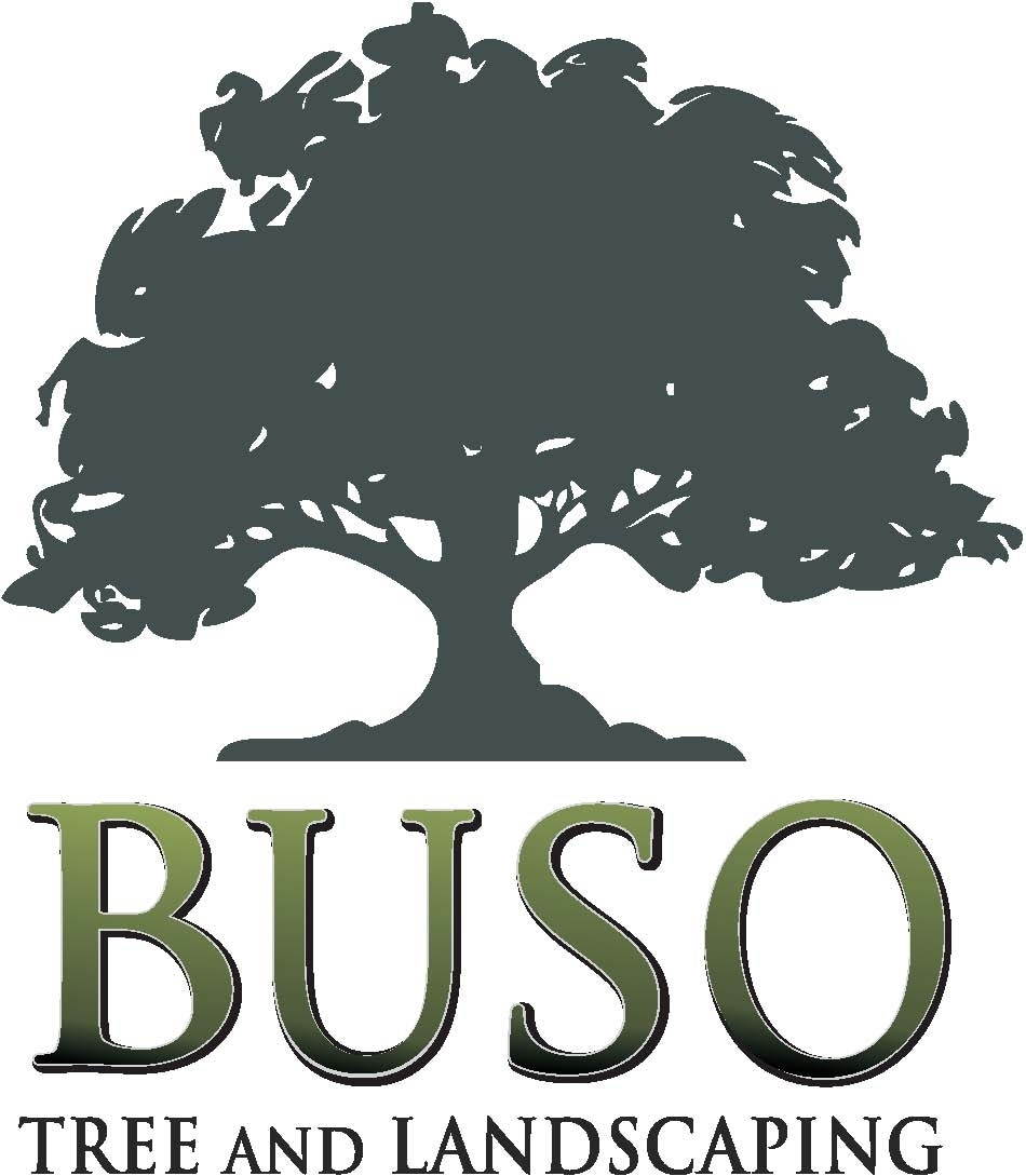 Buso Tree and Landscaping
