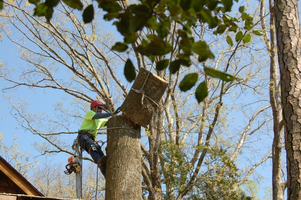 Butch's Tree Service