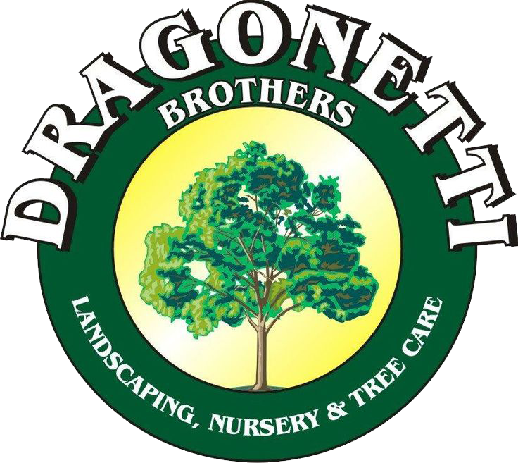 Dragonetti Brothers Landscapes