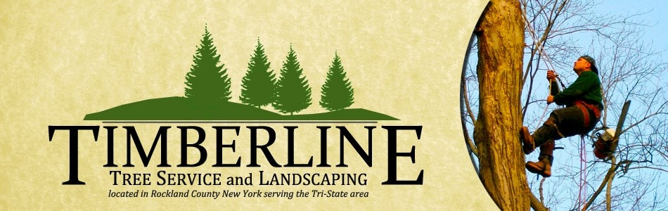 Timberline Tree Service