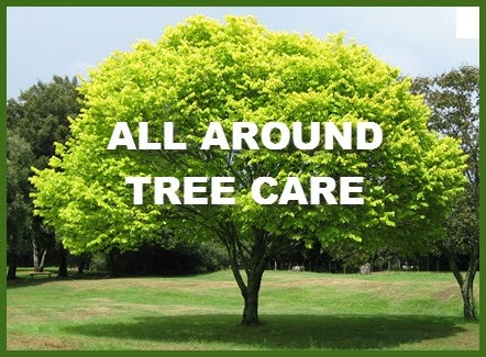 All Around Tree Care Reviews Temple