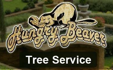 Hungry Beaver Tree Svc