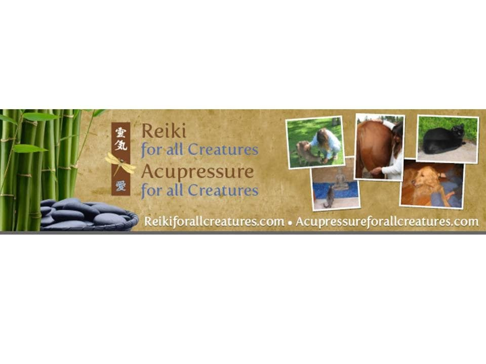 Reiki For All Creatures