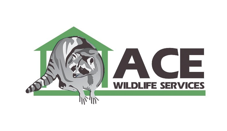 Ace Wildlife Service