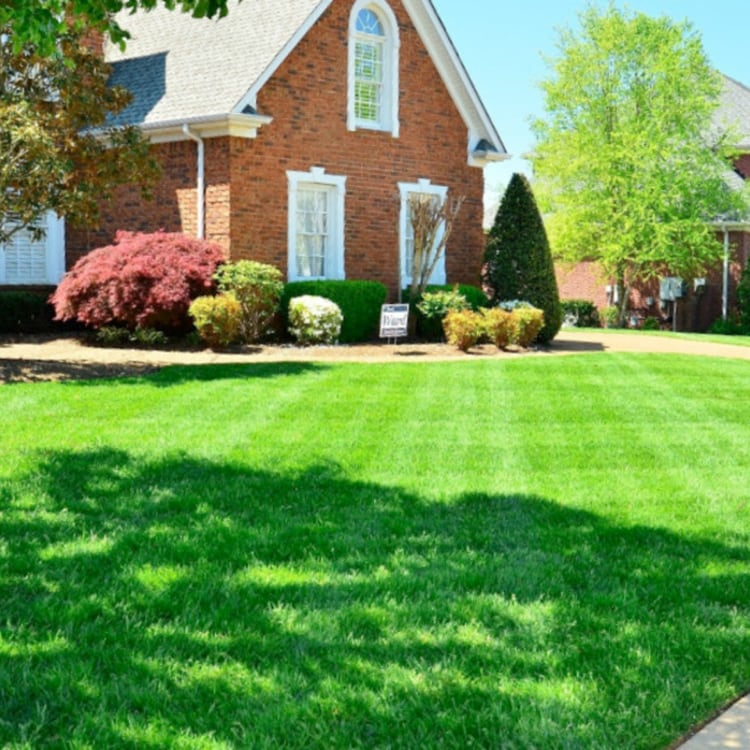 All-Natural Lawnscapes