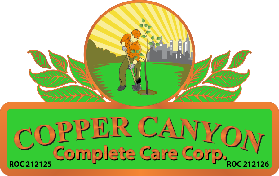 Copper Canyon Complete Care Reviews Queen Creek Az
