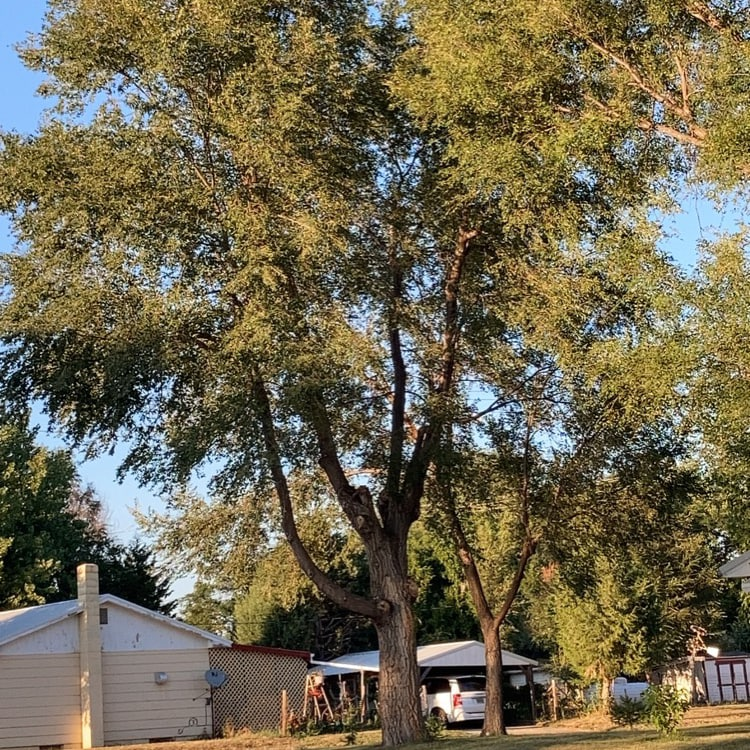Big Log Tree Service
