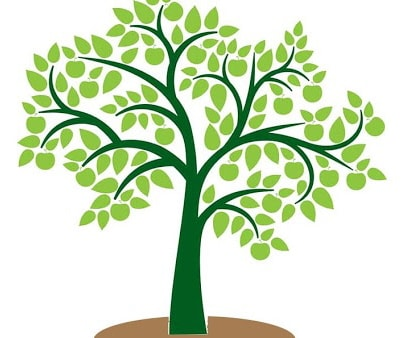 Restoration Tree Care and Landscaping