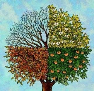 Four Season's Tree Service