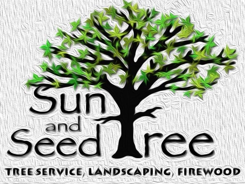 SUN AND SEED TREE