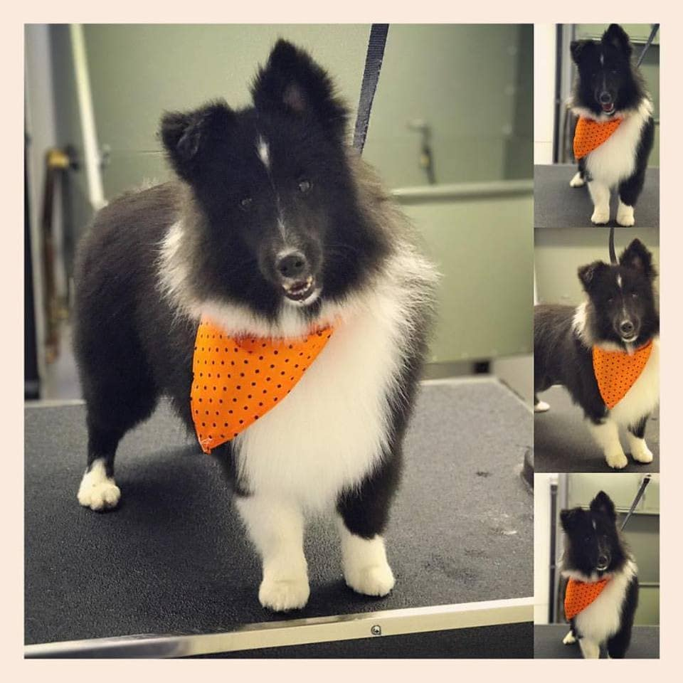 Top Best Dog Groomers In North Conway Nh Angie S List