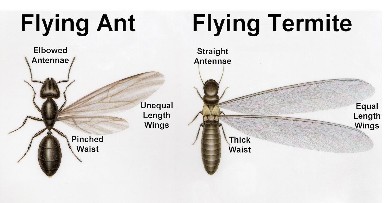 D & T Pest Control Inc