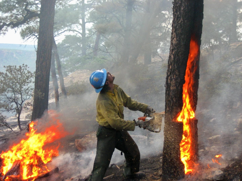 Elwyn Wildfire LLC