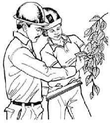 Robertsons Tree Service