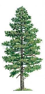SE Boise Tree & Shrub