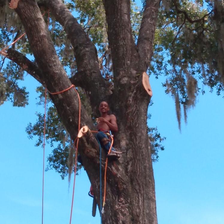 Arbor Ernie tree service