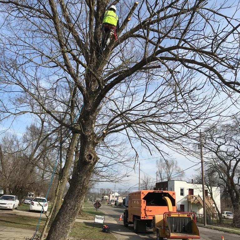 USA Solution Tree Service