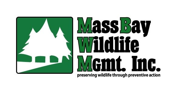 Mass Bay Wildlife Management Inc