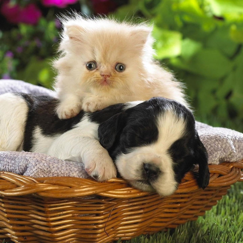Fur-Baby Pet Services LLC