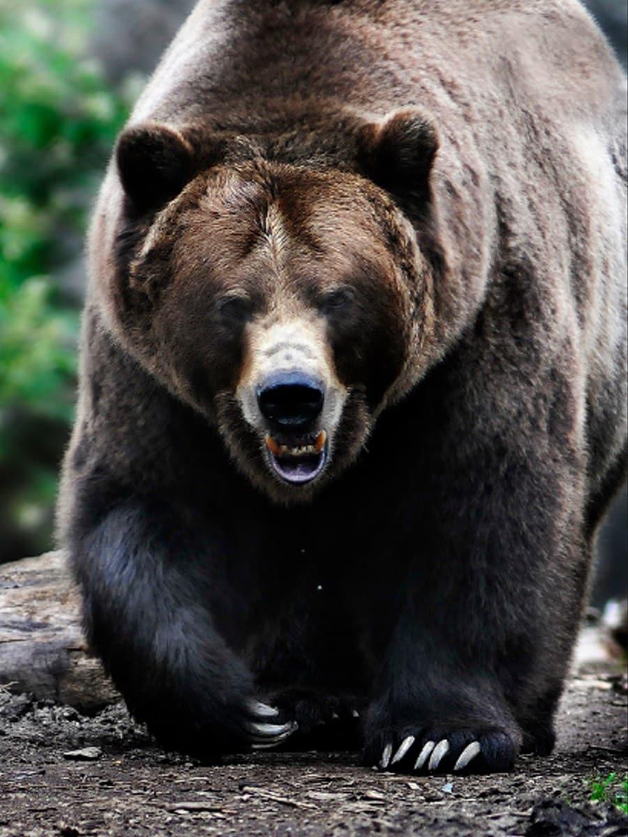 Big Bear Rehab