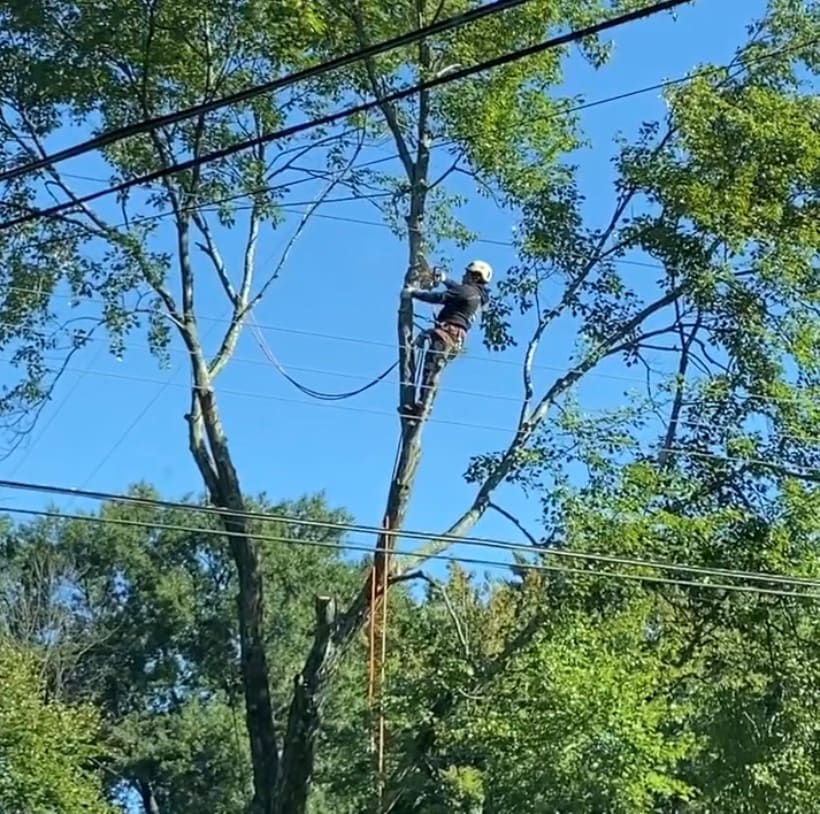 Climbers Tree Services Inc