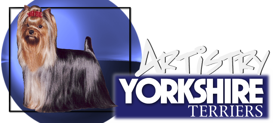 Artistry Yorkshire Terriers