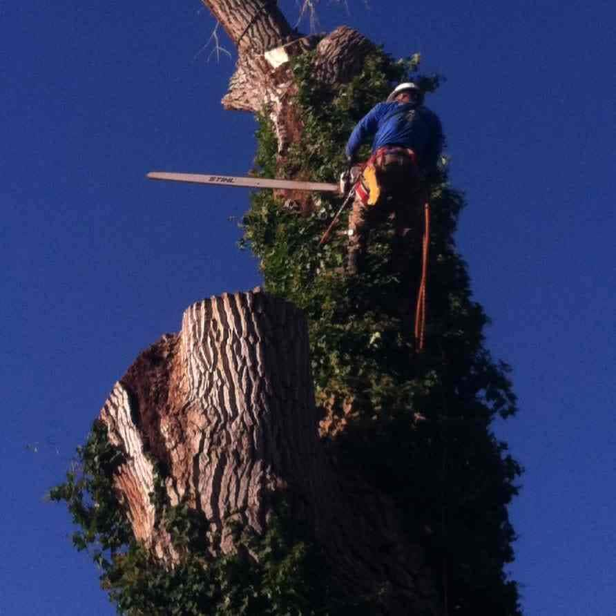 Battle Born Tree Service LLC