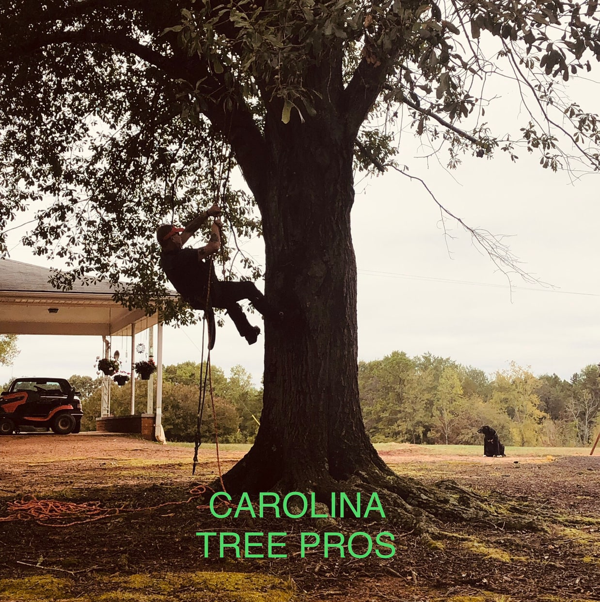Carolina Tree Pros