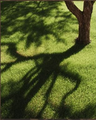 Minnesota Tree Experts logo
