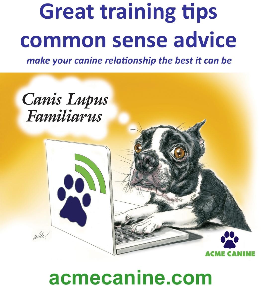 ACME CANINE LLC