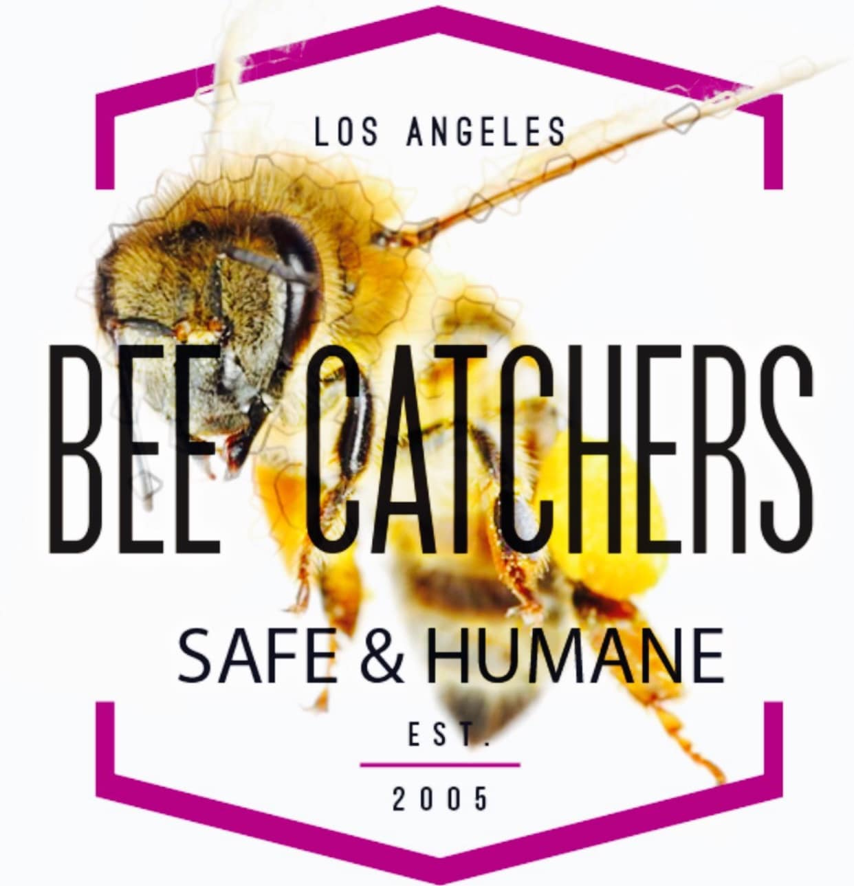 Bee Catchers Inc.