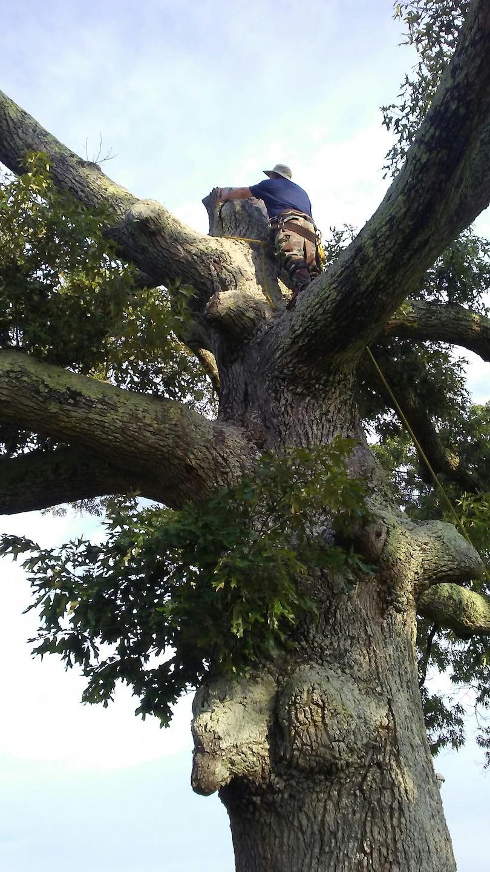Murray's Tree Experts