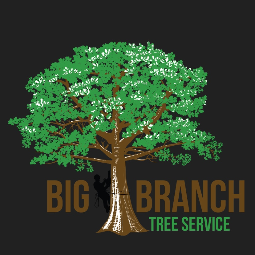 Top 10 Best Tree Removal Services In Jacksonville Fl Angie S List